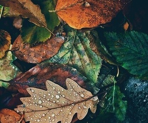 autumn, leaves, and october image