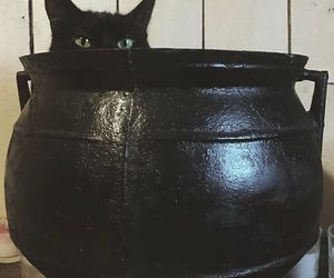 cat, witch, and cauldron image