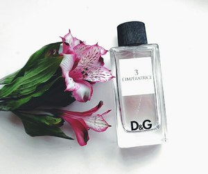 D&G, fashion, and flowers image