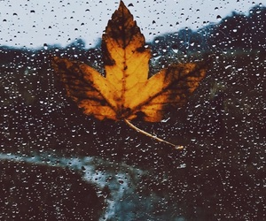 autumn, nature, and october image