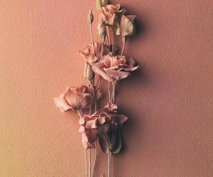 peachy, pink, and roses image