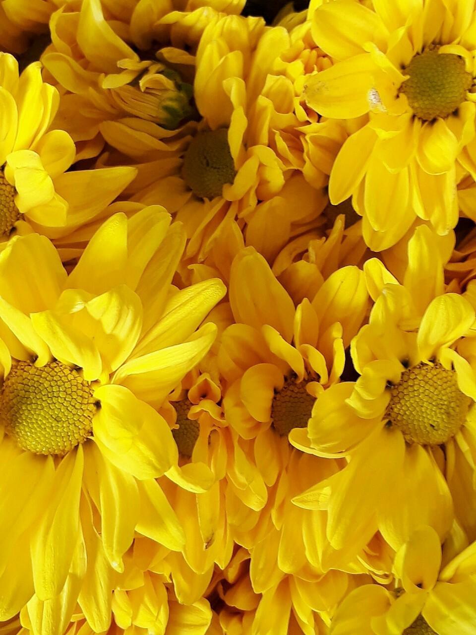 Картинка в желтом цвете фото