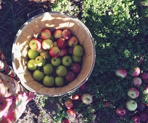 apple and picking image