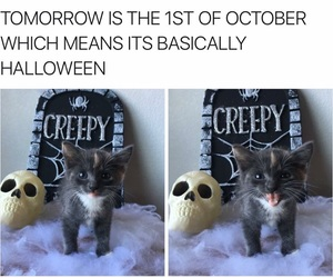 Halloween, kitty, and october image