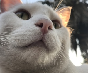 cat, whiskers, and feline image