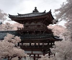 japan, sakura, and photography image