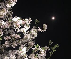 aesthetic, cherry blossom, and dark image