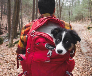 dog, camping, and puppy image