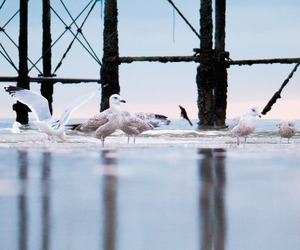 birds, coast, and coastal image