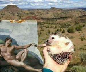 art, animal, and hedgehog image