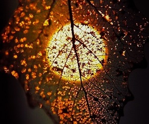 leaves, sun, and autumn image
