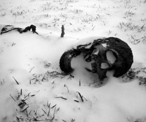 skull, snow, and black image
