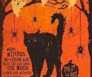 Halloween, black cat, and cat image
