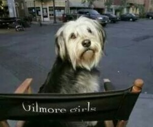 gilmore girls, paul anka, and serie image