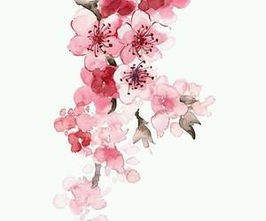 sakura and pink image