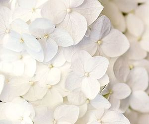 flowers, lovely, and white image