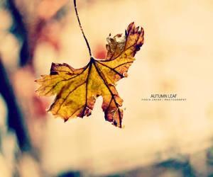 Image by foqiazafar