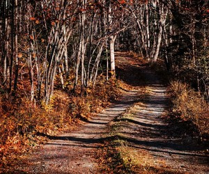 autumn, dirt road, and explore image