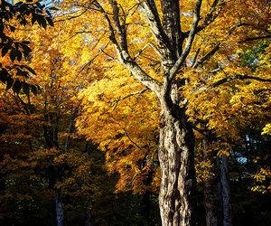 gravestones, new england, and autumn image