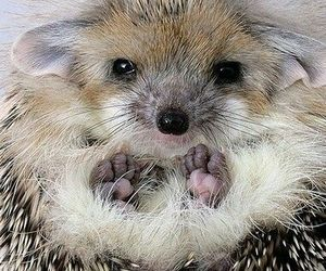 animal, animals, and hedgehog image