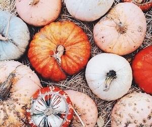 orange, white, and pumkin image