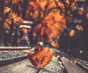 autumn, bench, and leaf image