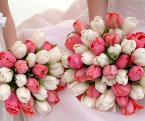 flowers, white, and fresh image