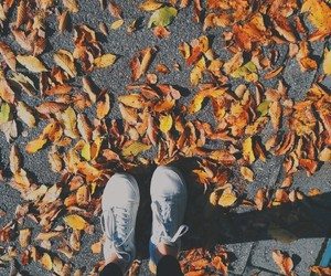 autumn, vans, and colorful image