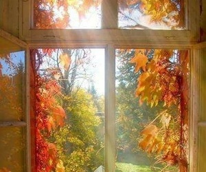 autumn, window, and fall image