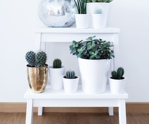 decoration, design, and interior image