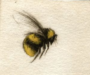 animal, bee, and drawing image