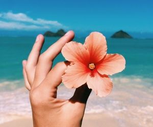 beach, beautiful, and flower image