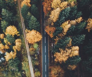 autumn, trees, and bright image