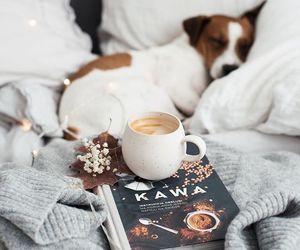 animals, autumn, and cozy image