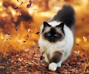 animals, nature, and autumn image