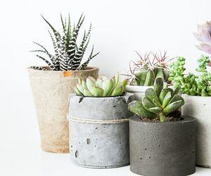 cactus, concrete, and diy image