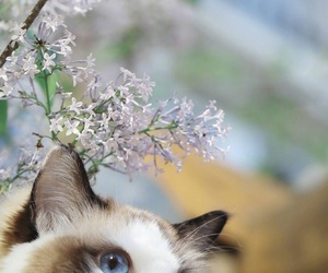 adorable, cat, and flower image