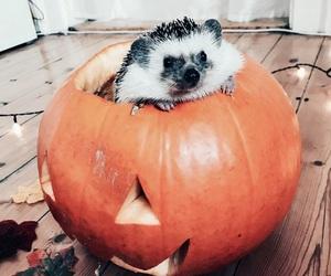 animal, autumn, and creature image