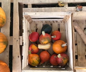 autumn, october, and pumpkins image