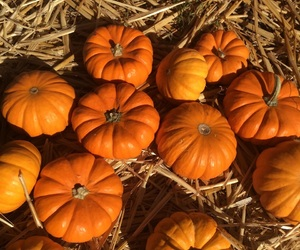 aesthetic, october, and pumpkin patch image