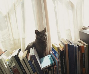 books, cat, and fall image