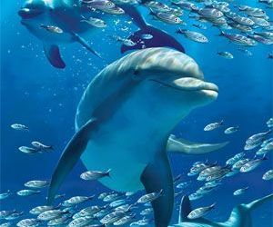 dolphins, sea, and beautiful image