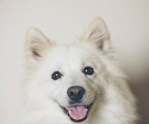 adorable, animals, and dogs image
