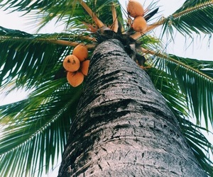 coconut and palms image
