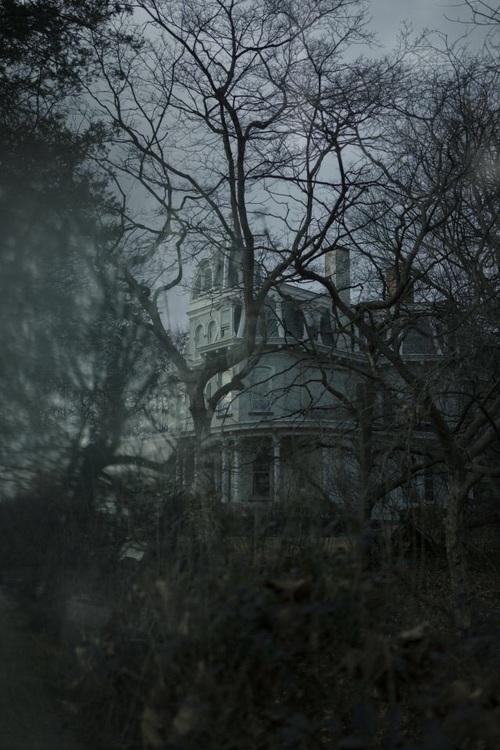 dark, Halloween, and woods image