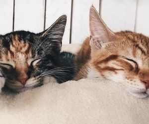 animal, cats, and kitten image