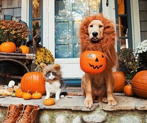 dog, autumn, and cat image