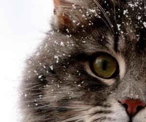 beautiful, cat, and so cute image