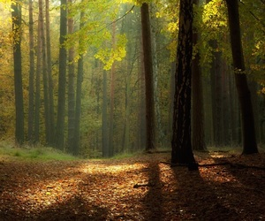 forest, woods, and trees image