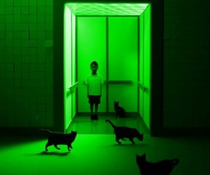 cat, boy, and green image